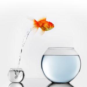 Un poisson saute d'un petit bocal vers un gros.